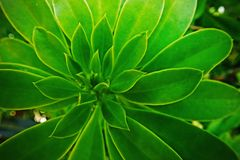 Jungle green leaves background royalty free stock photo