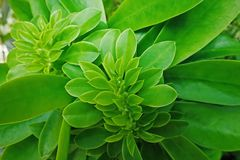 Jungle green leaves background stock photos