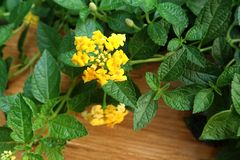 Jungle green leaves with flowers background stock photo