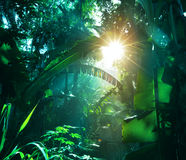 Jungle. Green jungle at morning in Vietnam stock photos
