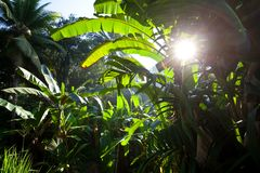 Jungle. Green jungle at morning in Vietnam Royalty Free Stock Photography