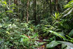 Jungle. Green thickets of the jungle in the mountains of Malaysia Stock Photo