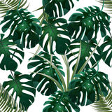 Jungle. Green thickets of tropical palm leaves and monstera. Seamless floral pattern. Isolated on a white background. Vector illustration Stock Images