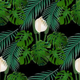 Jungle. Green tropical leaf, monster flowers and palm leaves. Seamless floral pattern.  on black background Stock Photography