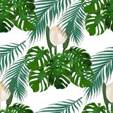 Jungle. Green tropical leaf, monster flowers and palm leaves. Seamless floral pattern.  on white background Royalty Free Stock Images