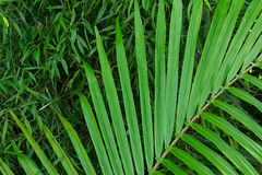 Jungle greenery, fresh and organic foods, wholesome and healthy Royalty Free Stock Image