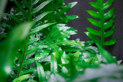 Jungle greenery full of tropical green plants makes for a nice design in your back yard. This beautiful jungle greenery with black Stock Photo