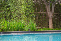 Jungle greenery planted nearby the swimming pool gives you a nice green outdoor feeling while travelling or at your home spa or po Royalty Free Stock Photos
