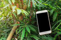 Jungle greenery in tropical exotic rain forest lurking full of d Royalty Free Stock Photography