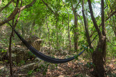 Jungle hammock hanging in rainforest. Black Mexican hammock hangs between two trees in jungle of Chiapas, Mexico as sunlight filters through trees Royalty Free Stock Image
