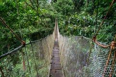 Jungle Hanging Bridge Royalty Free Stock Photos