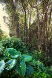 Jungle. In Hawaii stock photos