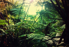 Jungle. In Hawaii stock photography