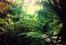 Jungle Stock Photography
