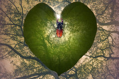 Jungle heart with horned insect. Transparent leaf heart that gradually fades in the jungle trees background and a exotic insect that is forming a heart with his Royalty Free Stock Images