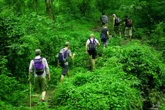 Jungle hike Stock Image