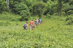Jungle hike Stock Photo