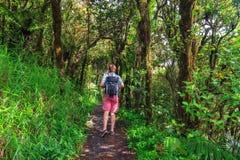 Jungle hiking Royalty Free Stock Image