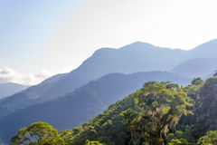 Jungle and Hills. View of a jungle with hills in the background in the Sierra Nevada de Santa Marta in Colombia Royalty Free Stock Photography