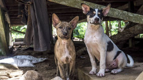 Jungle home dogs Stock Images