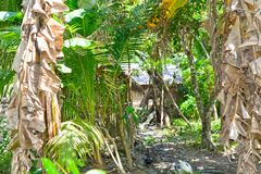 Jungle home in mindoro Stock Images