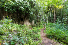 Jungle house Stock Images