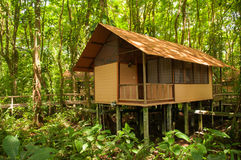 Jungle hut Stock Images