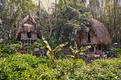 Jungle huts Stock Images
