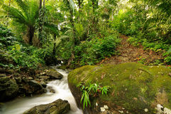 Free Jungle In Central America Royalty Free Stock Images - 44462029
