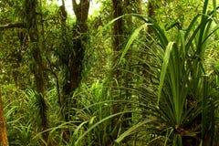 Jungle indonésienne Photographie stock libre de droits