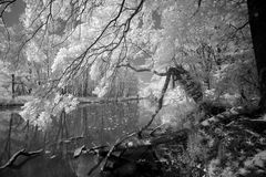 Jungle Infrared Stock Photography