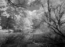 Jungle Infrared Stock Images