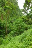 Jungle on the island of Camiguin. Philippines Royalty Free Stock Photo