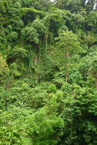 Jungle on the island of Camiguin Royalty Free Stock Image