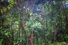 Jungle at Khao Yai National Park Royalty Free Stock Photography