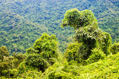 Jungle at Khao Yai National Park Stock Photography