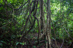 Jungle at Khao Yai National Park Stock Image
