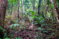 Jungle at Khao Yai National Park Royalty Free Stock Photo