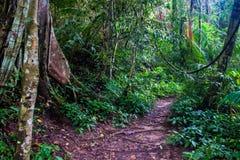 Jungle at Khao Yai National Park Stock Photography
