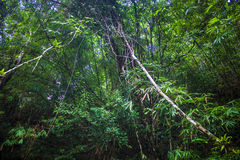 Jungle at Khao Yai National Park Royalty Free Stock Photography