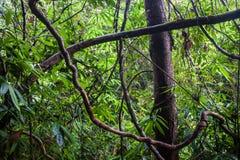 Jungle at Khao Yai National Park Stock Images