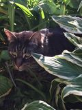 Jungle Kitty Photo libre de droits