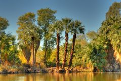Jungle Lagoon 2. Lovely jungle lagoon with palm trees and lake Stock Photography
