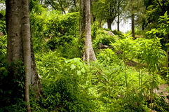 Jungle Landscape Royalty Free Stock Photography