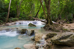 Jungle Landscape Royalty Free Stock Photography