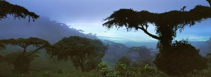 Jungle landscape in gabon. Jungle landscape in the centre of gabon royalty free stock images