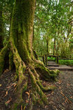 Jungle landscape. Outdoor park with big tree roots at tropical rain forest Stock Photos