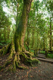 Jungle landscape. Outdoor park with big tree roots at tropical rain forest Royalty Free Stock Photography