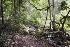Jungle landscape with path and creek stock images