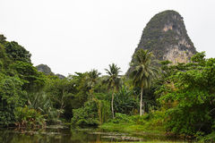 Jungle landscape Royalty Free Stock Photos